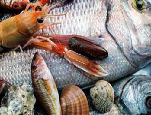 Στέκια για φρέσκο Ψάρι και Οστρακοειδή